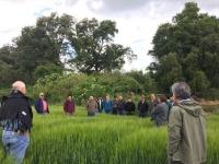 Días de campo realizados en predios de productores de cebada de las regiones del Bio Bio, Araucanía y Los Lagos